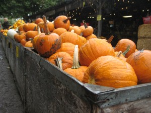 Pumpkins and Squash at Avila Valley Barn
